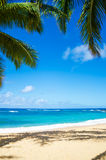 Palm trees on the sandy beach in Hawaii. Coconut Palm tree on the sandy Poipu beach in Hawaii, Kauai Stock Photo