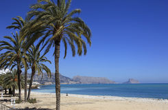 Palm Trees sandy Beach and Mediterranean Sea and town of Altea Spain. Palm Trees on a sandy beach at Altea on the Costa Blanca southern Spain Royalty Free Stock Images
