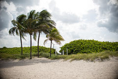 Palm Trees and Sandy Beach Royalty Free Stock Photos