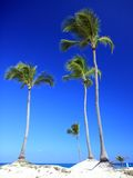 Palm trees and sandy tropical beach Stock Images