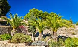 Palm trees at Santa Barbara Castle in Alicante, Spain Stock Image