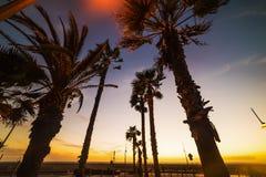Palm trees in Santa Monica beach at sunset. California royalty free stock photos