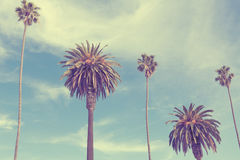 Palm trees at Santa Monica beach. Vintage post processed. Fashion, travel, summer, vacation and tropical beach concept Royalty Free Stock Photos