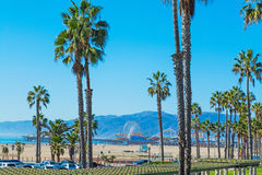 Palm trees in Santa Monica Stock Photography