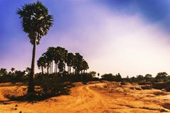 Palm trees scenery. Colourful sky with beautiful landscape location Royalty Free Stock Photography