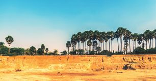 Palm trees scenery. Landscape scenery of palm trees Stock Photos