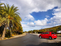 Palm Trees Scenic Road Stock Photography