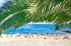 Palm trees and sea Stock Photos