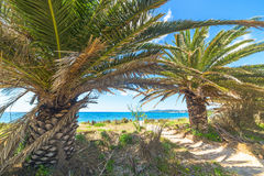 Palm trees by the sea in Alghero. Italy Stock Photography