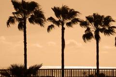 Palm trees at sea coast. Evening in Turkey Royalty Free Stock Photos