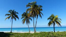 Palm trees by the sea in Cuba. Central America Royalty Free Stock Photography