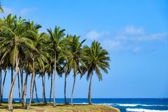 Palm trees by the sea. The first photos after a long rain break in the Dominican Republic Stock Photos