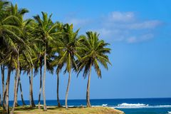 Palm trees by the sea. The first photos after a long rain break in the Dominican Republic Stock Photo