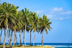 Palm trees by the sea. The first photos after a long rain break in the Dominican Republic Stock Image