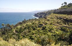 Palm trees beside the sea. On the Spanish island of Tenerife on a sunny day Stock Photos