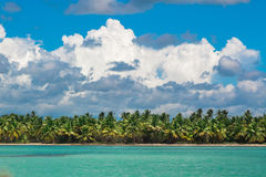 Palm trees on sea shore at beautiful sunny day. Stock Photography