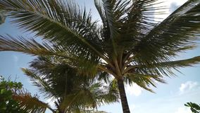 Palm trees by the sea stock footage