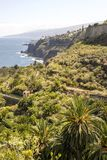 Palm trees beside the sea. On the Spanish island of Tenerife on a sunny day. It´s a vertical picture Stock Image