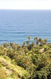 Palm trees beside the sea. On the Spanish island of Tenerife. It is a vertical image on a sunny day Stock Photos