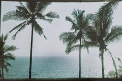 Palm trees and the sea. Tropical landscape with palm trees and the sea Royalty Free Stock Photo