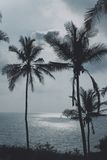Palm trees and the sea. Tropical landscape with palm trees and the sea Royalty Free Stock Photos