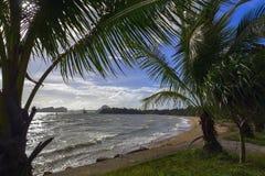 Through Palm Trees. Stock Photo