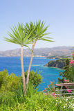 Palm trees and sea view in Greece Stock Photography