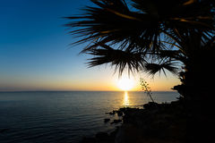 Palm trees and sea view at sun rise. In protaras beach, cyprus island Royalty Free Stock Image