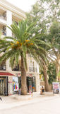 Palm trees on the seafront of Petrovac, Montenegro royalty free stock image