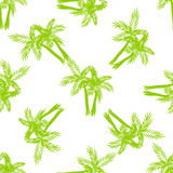 Palm trees seamless vector pattern. Royalty Free Stock Photos