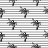 Palm trees seamless vector pattern. Stock Images