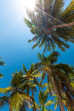 Palm trees at the seashore Royalty Free Stock Images