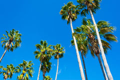 Palm trees seen from below Royalty Free Stock Images