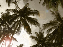 Palm trees in sepia tone. Brazil Royalty Free Stock Photos