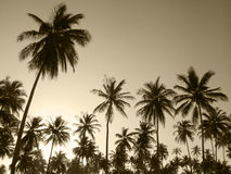 Palm trees in sepia tone. Brazil Stock Images