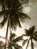 Palm trees in sepia tone. Brazil Royalty Free Stock Images