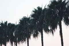 Palmtrees. A series of summery palmtrees Royalty Free Stock Images