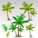 Palm trees set Royalty Free Stock Photos