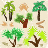 Palm trees set Royalty Free Stock Photography