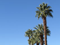 Palm trees Stock Image