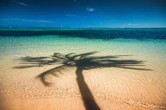 Palm trees shadow on the tropical beach Punta Cana, Dominican Re Royalty Free Stock Images