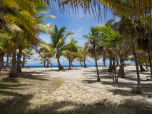 Palm trees. A shady grove of palm trees near the sea on a sunny day stock photo