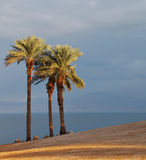 A palm trees on the shore Royalty Free Stock Photo