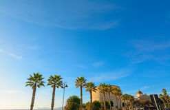 Palm trees by the shore in Alghero Royalty Free Stock Image
