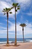 Palm trees at the shore atlantic ocean. The image of the tropical tree palm trees at the shore atlantic ocean.Tenerife, Canary Islands, Spain Stock Photos