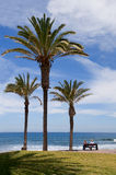 Palm trees at the shore atlantic ocean. Tropical palm trees at the shore atlantic ocean.Tenerife, Canary Islands, Spain Stock Images
