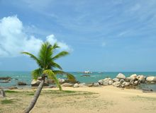 Palm trees on the shore, the bounty, Park World's end, China, Ha Royalty Free Stock Photography