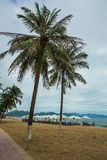Palm trees on the shore of sea Stock Images