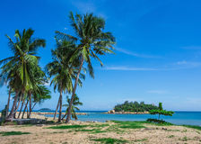Palm trees on the shore of sea Stock Photo