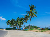 Palm trees on the shore of sea Royalty Free Stock Image